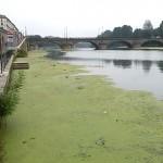 fiume_po_verde7