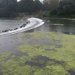 fiume_po_verde8