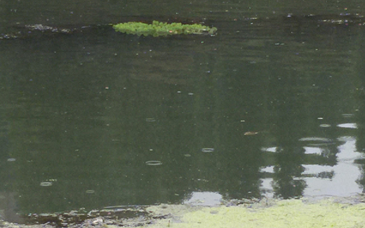 fiume_po_verde9