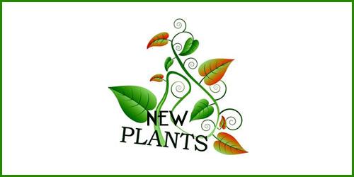 nuove_piante