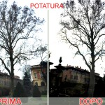 platano_potatura520