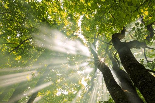 alberi510