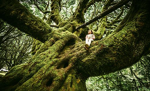 alberi_bimba510