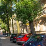 alberi_parcheggi510