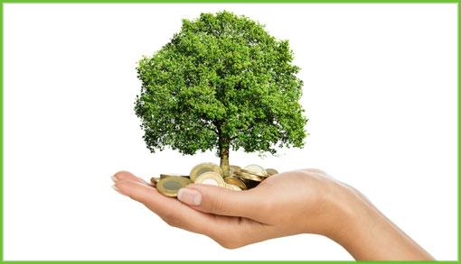 soldi_alberi510