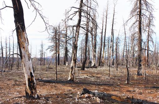 alberi_morti_510
