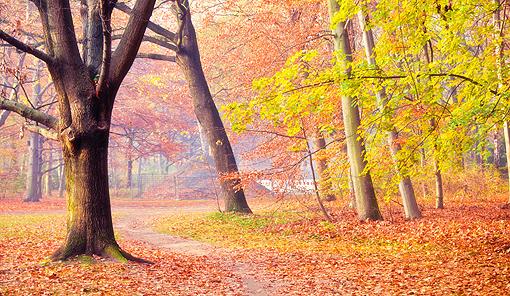 bosco_autunno510