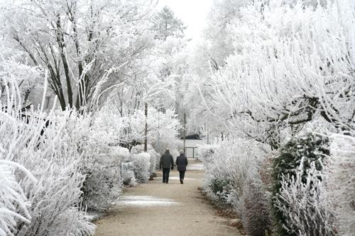 giardino_ghiacciato500