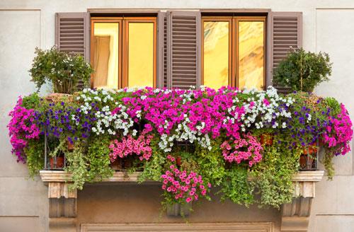 Fioriere da balcone: abbinamenti per la mezz\'ombra | Fiori e Foglie