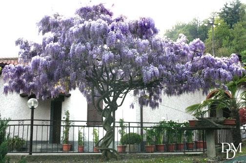 Il giardino dei lilla buongiorno alberi da giardino nomi e foto alberi di alto fusto nomi - Foto di alberi da giardino ...
