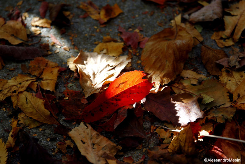 Autunno da ammirare  all Oasi Zegna è tempo di foliage  9931b439569