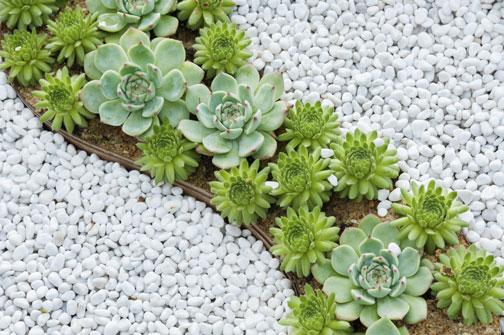 Piante Ufficio Ossigeno : Le piante che attirano energie positive in casa e in ufficio