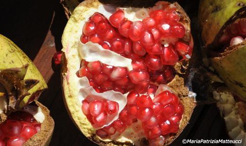 Vivaio Rosso Melograno : Riscoperto il dolce melograno verde di russi meraviglia segreta
