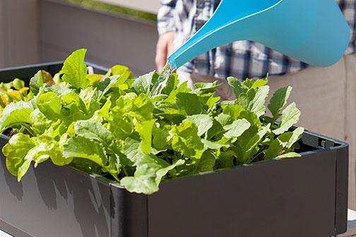 Orto in vaso: cosa e quando seminare sul balcone | Fiori e Foglie