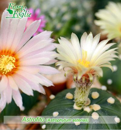Immagini Fiori Con Nomi.Piante Grasse Succulente E Cactus Diamogli Un Nome Fiori E Foglie