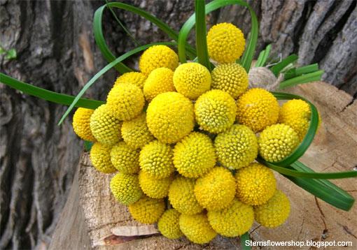 e permette ai dorati capolini della \u201cBilly Buttons\u201d di intonarsi  perfettamente anche ai fiori inusuali, come le curiose Protee, oppure i  fogliami