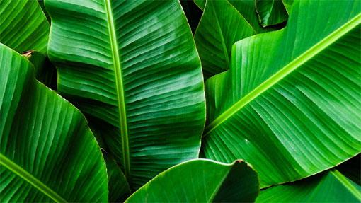 Fiori Verdi Nomi.10 Piante Per Portare I Tropici Nel Verde Di Casa Fiori E Foglie