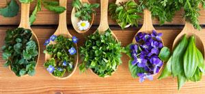 Erbe aromatiche e utili: le schede