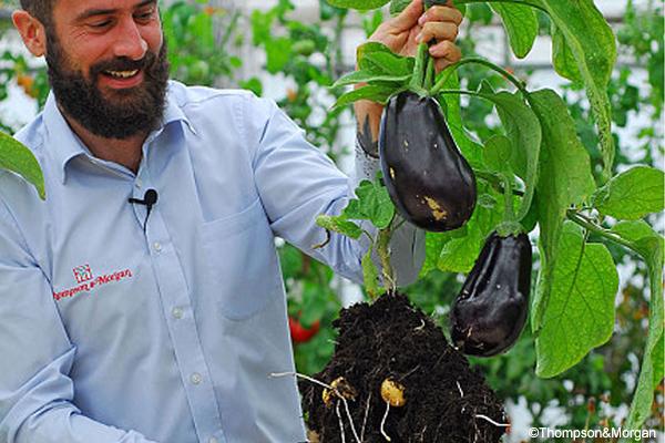Patate e melanzane da un 39 unica pianta arriva egg and for Melanzane innestate
