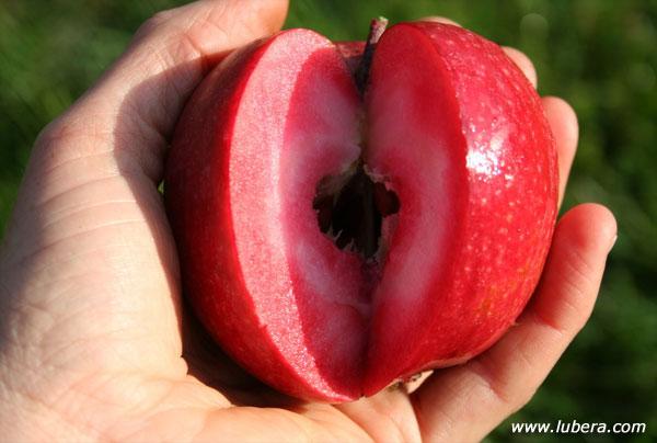 Vivai Rosso Antonio : Anche in italia è arrivata la mela rossa dentro! fiori e foglie