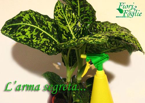 L 39 arma segreta per le piante in casa d 39 inverno fiori e - Le piante grasse si possono tenere in casa ...