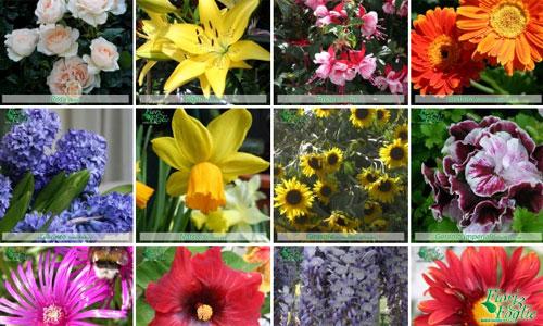 elenco fiori da giardino