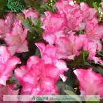 Nomi Fiori Rosa.Come Si Chiama Diamo Un Nome A Fiori E Piante Fiori E Foglie