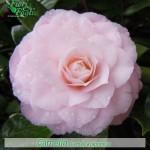 Fiori Simili Alle Rose Nome.Come Si Chiama Diamo Un Nome A Fiori E Piante Fiori E Foglie