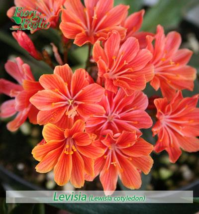 Come si chiama diamo un nome a fiori e piante 1 fiori - Immagini di fiori tedeschi ...