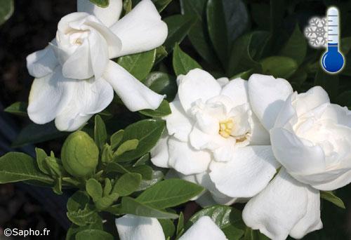 Fiori profumati fiori e foglie - Fiori gialli profumati ...