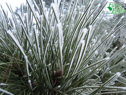 Freddo polare proteggiamo le piante e i fiori delicati for Piante da esterno resistenti al freddo