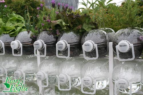 Orto balcone nelle bottiglie ecologico ed economico - Giardini in bottiglia ...