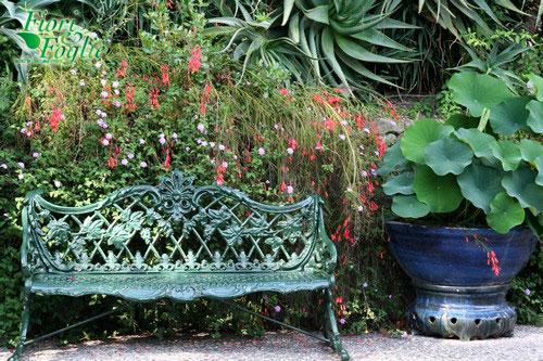 Giardini la mortella un esempio di turismo verde da - Angoli di giardino ...