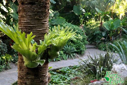 Giardini la mortella un esempio di turismo verde da seguire fiori e foglie - Giardino la mortella ...
