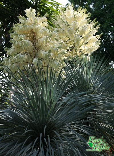 Piante esotiche da giardino piante esotiche da giardino da for Piante belle da giardino
