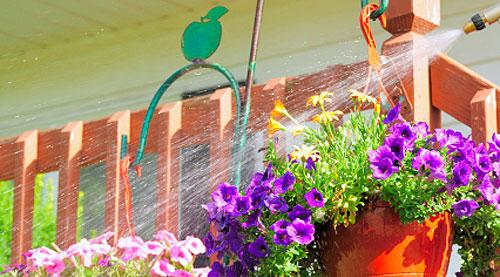 Annaffiare i fiori sul balcone? Può essere un reato! | Fiori e Foglie