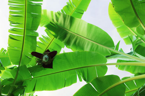 Piante Da Appartamento A Foglie Larghe.Piante Tropicali Fiori E Foglie