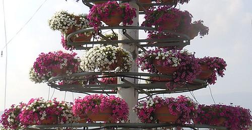 Piante Surfinie : Surfinie fiori e foglie