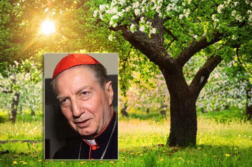 giardino martini500 Inaugurati i giardini del Cardinal Martini, in Israele gli dedicano una foresta