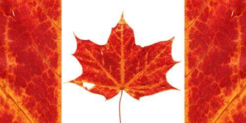 Canada le nuove banconote non funzionano hanno la foglia - Foglia canadese contorno foglia canadese ...
