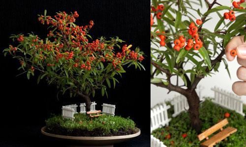 Arriva la moda dei giardini miniatura un paesaggio in una ciotola fiori e foglie - Giardino in miniatura ...