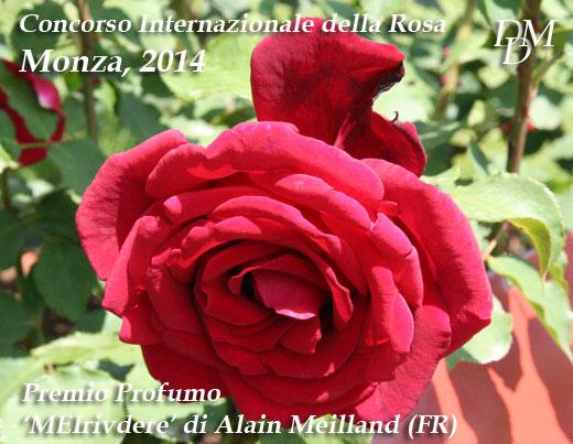 premio profumo14 Monza 2014, Concorso della Rosa: premiazione congelata