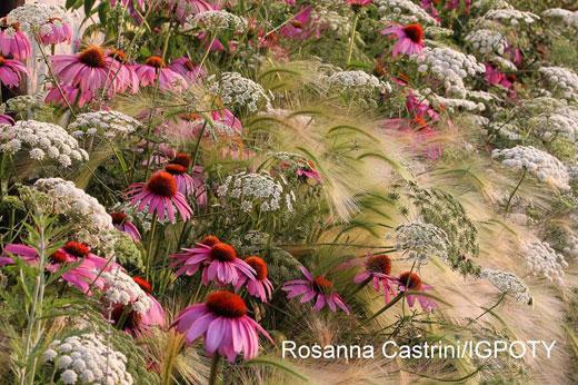foto_rosannacastrini520